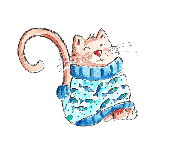 cat in sweater