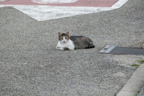 O pisică în mijlocul drumului